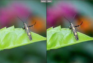Cách làm rõ ảnh bị mờ bằng photoshop cs6 bằng RGB Color hoặc Lab Color